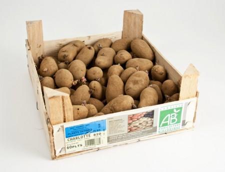 Pommes de terre Charlotte bio