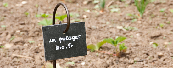 Etiquette ardoise pour le potager
